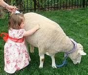 Find Kid s Birthday Party Petting Zoo Rentals! | Fun ...
