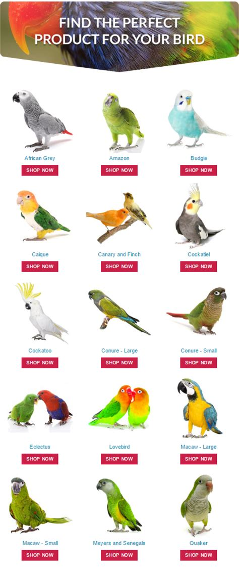 Find the perfect product for your pet #parrot by shopping ...
