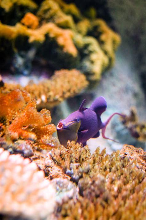 Fish Face – VIA Aquarium NY