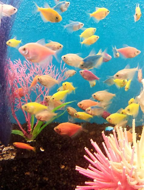 Fish frenzy: What to know before getting a freshwater ...
