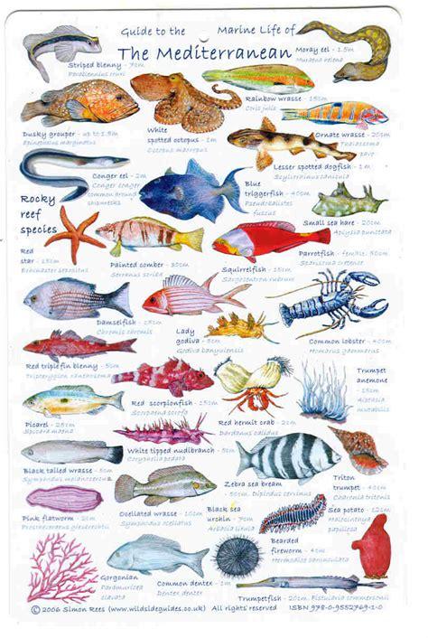 Fish of the Mediterranean Sea