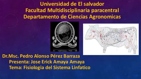 Fisiologia del sistema linfatico
