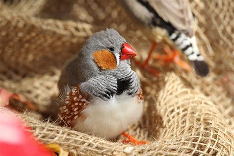 Five of the Quieter Pet Bird Species