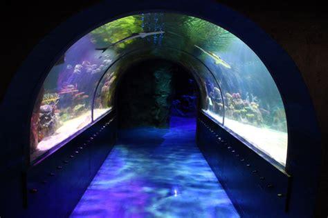 Five Things We Love About Shreveport Aquarium   20x49.com