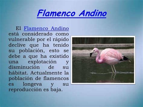 Flamenco Andino El Flamenco Andinoestá considerado ...