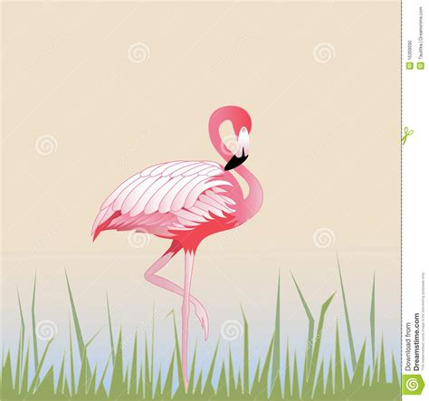 Flamenco del pájaro ilustración del vector. Ilustración de ...
