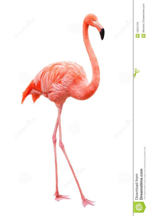 Flamenco del pájaro imagen de archivo. Imagen de fauna ...
