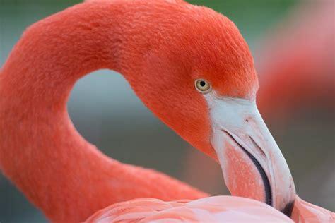 Flamencos   Aves Exóticas