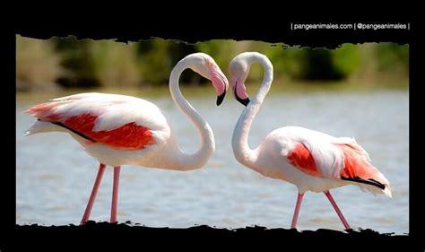 Flamencos: Características, tipos, hábitat y migración ...