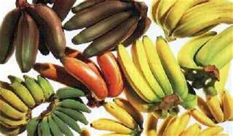 Flavors of Brazil: FRUITS OF BRAZIL   Banana varieties