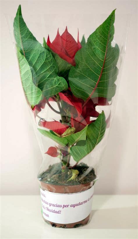 Flor de Pascua con mensaje para regalar a los profesores ...