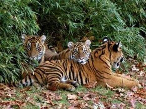 Flora e fauna / Bangladesh / Asia meridionale / Asia ...