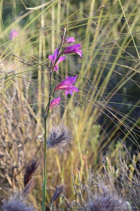 Flora humilde  y silvestre  del Mediterráneo que da color ...
