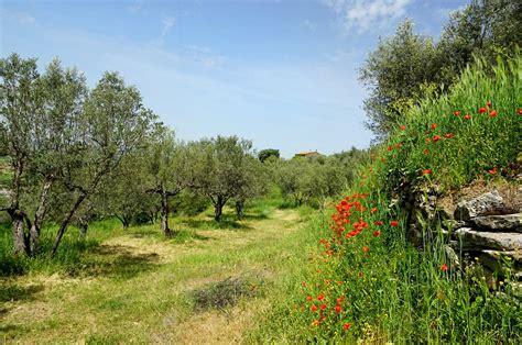 Flora pugliese, tra terreni calcarei, aree protette e ...