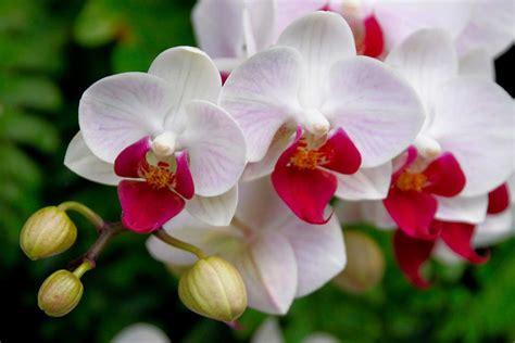 Flora y fauna de la selva peruana   Inka Jungle Tour ...