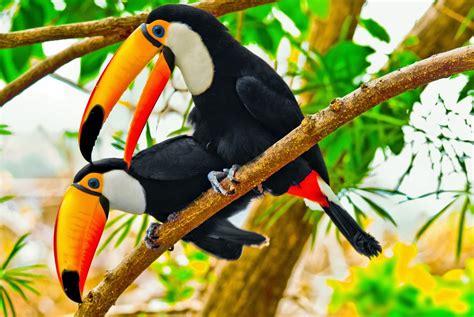 FLORA Y FAUNA DEL AMAZONAS: FLORA Y FAUNA DEL AMAZONAS
