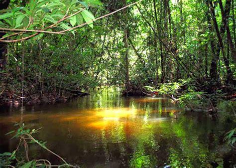*FLORA Y FAUNA DEL AMAZONAS *: FLORA Y FAUNA DEL AMAZONAS