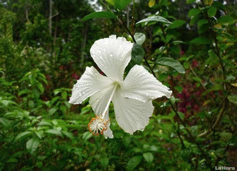 Flora y Fauna   Ecuador, regiones naturales