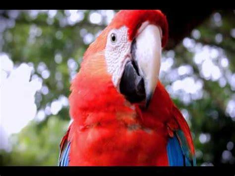 FLORA Y FAUNA EN EL AMAZONAS   YouTube