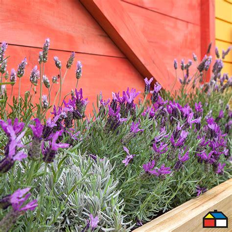#Flores #Color | Flores, Plants, Color