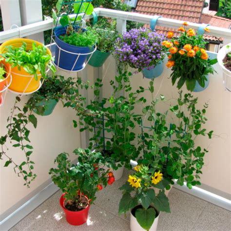 Flores De Exterior Para Terrazas   Ideas de nuevo diseño