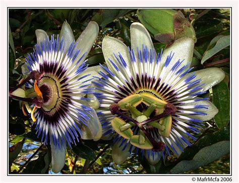 Flores Mas Raras Del Mundo | Las 8 flores mas raras del ...