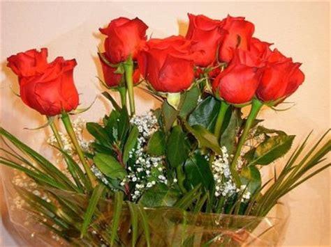 Flores para regalar el 14 de febrero | Cuidado de Plantas