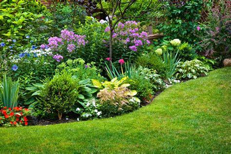 Flores perennes y plantas de exterior con flor para el ...