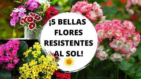 Flores resistentes al sol / 5 plantas resistentes al sol ...