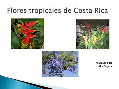 Flores tropicales de Costa Rica