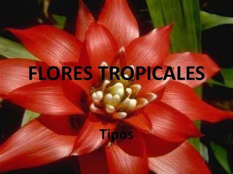 Flores Tropicales: Tipos