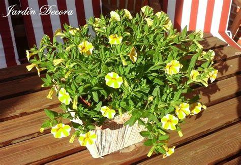 Flores Y Plantas A Pleno Sol | demariposas.com | Plantas a ...