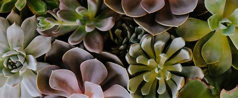 Flores y plantas para regalar a un hombre | Blog Bourguignon