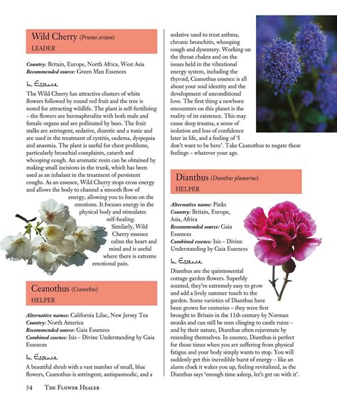 Flower Essences for Well being | Book by Barbara Olive ...