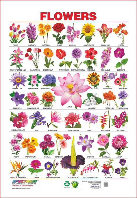flower images with names   Saferbrowser Yahoo Image Search ...