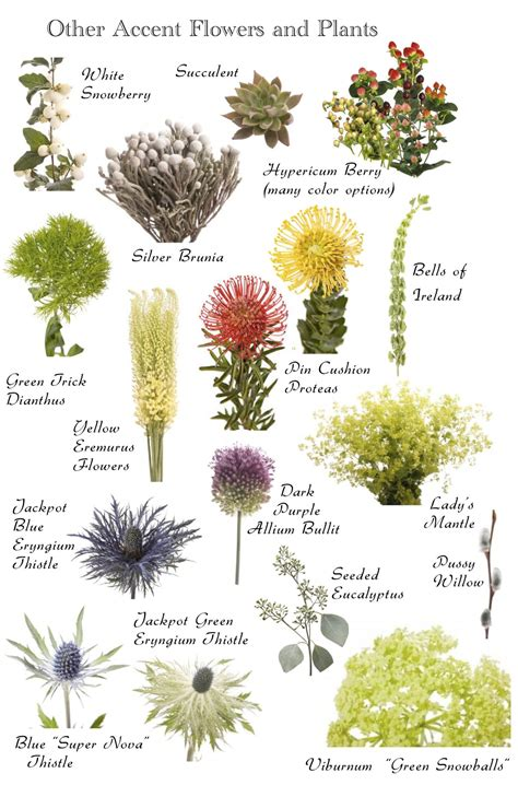 Flower names by Color | Flower names, Types of flowers ...