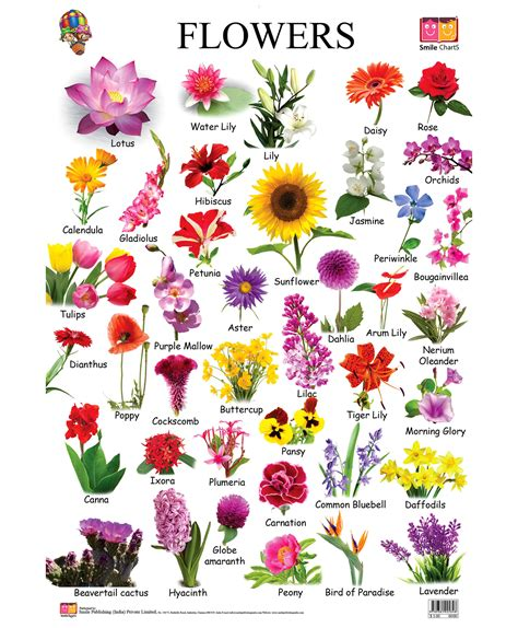 Flower Names   We Need Fun