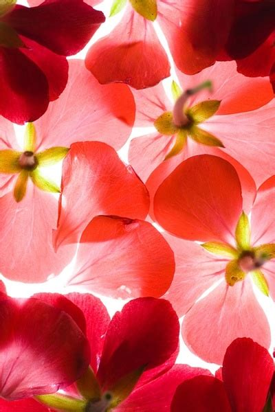 Flowers background free stock photos download  18,171 Free ...