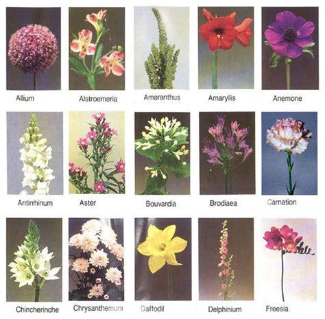 flowers for flower lovers.: flowers names.