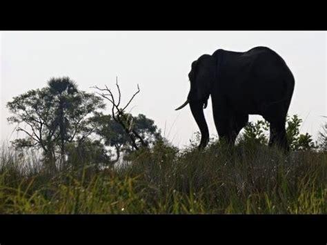 Flying in Okavango Delta, Moremi Game Reserve  Botswana ...