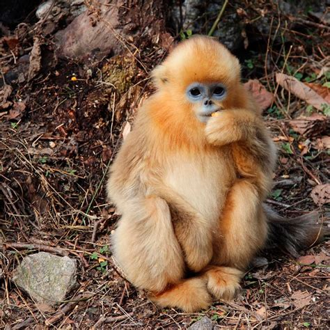 Following the Amazing Animals of China: an Eastern ...