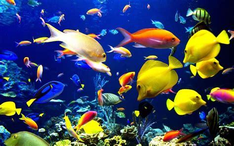 Fondo de escritorio de peces tropicales   1440x900 ...