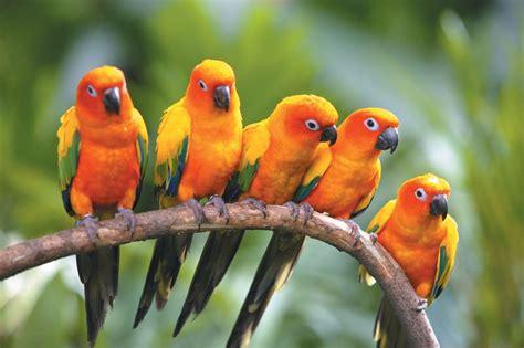 Fondo de pájaros exóticos :: Imágenes y fotos