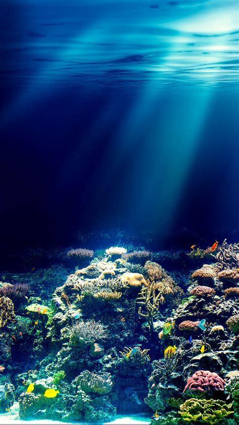 Fondo del mar   Fotografía del océano, Fondo de pecera ...