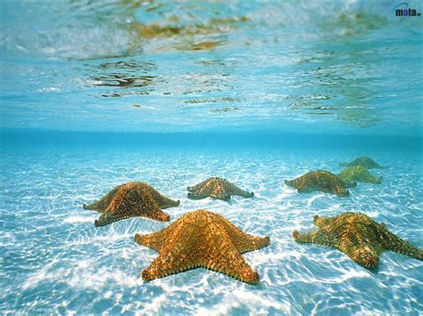 FONDOS COPADOS: fondo de pantalla de estrellas de mar