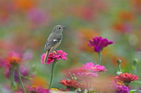 Fondos de pantalla : aves, Animales, Flores, naturaleza ...
