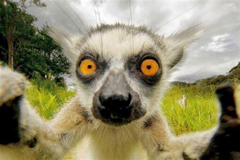 Fondos de pantalla de animales graciosos y divertidos ...