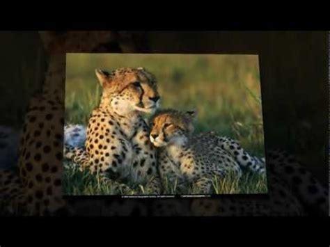 Fondos de Pantalla de Animales Salvajes   www.tu pc.com ...