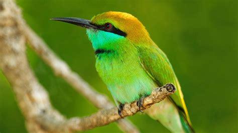 Fondos de pantalla de pájaros | Fondos de pantalla y mucho más