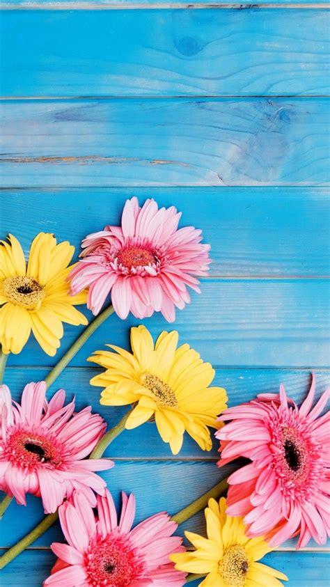 Fondos de pantalla Flores amarillas y rosadas del gerbera ...